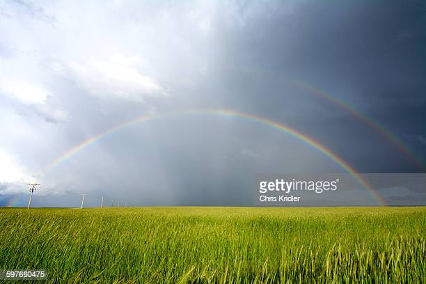 Double rainbow created by storm over wheatfield, Vona, Colorado, USA