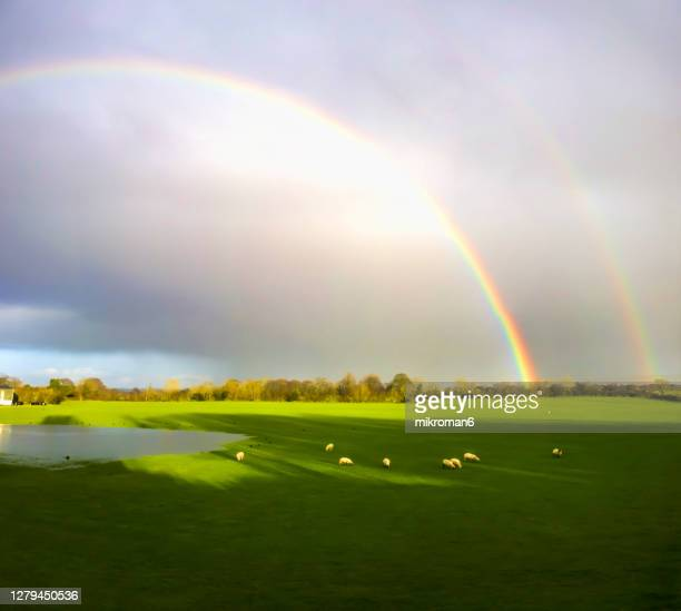 double rainbow landscape - sheep stock pictures, royalty-free photos & images