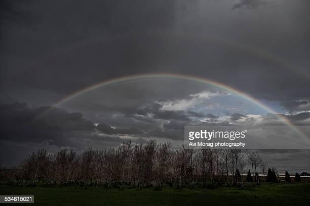 Double rainbow over old paulownia trees
