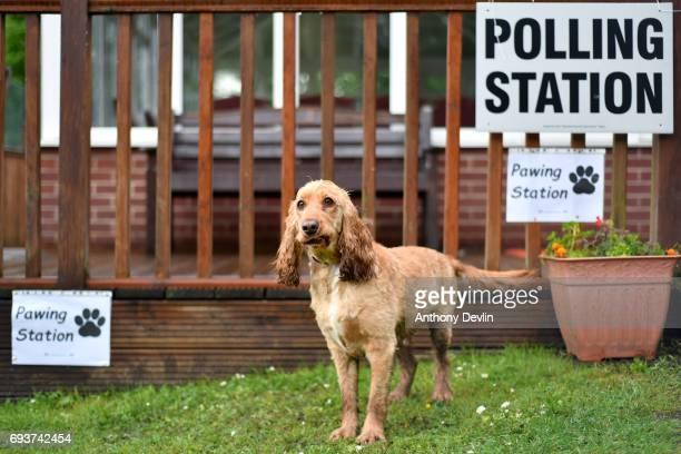 Dougie the Cocker Spaniel stands beside a sign reading 'Pawing Station' outside a polling station on June 8, 2017 in Stalybridge, Greater Manchester,...