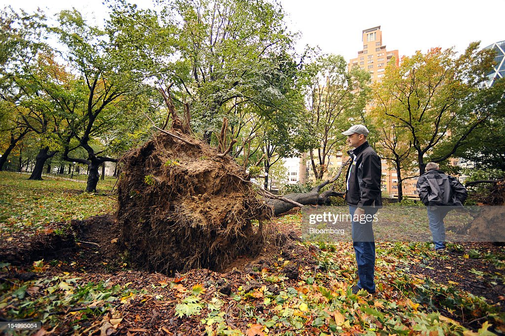 Douglas Blonsky, president and chief executive officer of the Central Park Conservancy, examines a 100-year-old uprooted oak tree in Central Park in New York, U.S., on Tuesday, Oct. 30, 2012. The Atlantic superstorm Sandy churned across Pennsylvania after blacking out much of southern Manhattan and leaving a trail of flooding, death and destruction along the East Coast. Photographer: Peter Foley/Bloomberg via Getty Images