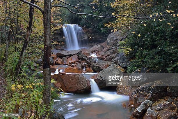 douglas falls - monongahela national forest stock photos and pictures