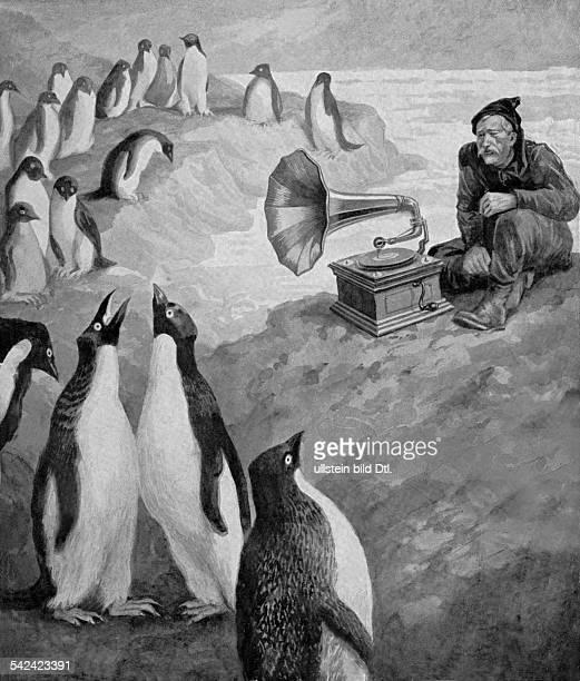 Douglas Mawson*05051882Forscher Antarktisforscher AustralienDouglas Mawson Expedition 19111914 Wirkung der Musik auf Pinguine Illustration veroeff...