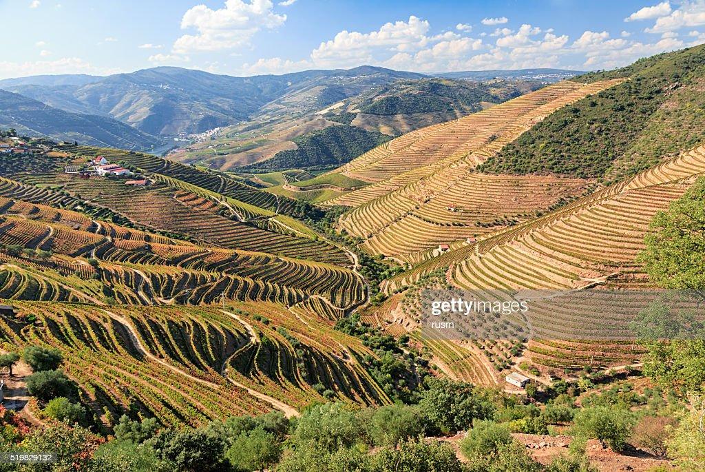 Douro river vineyards, Portugal : Stock Photo
