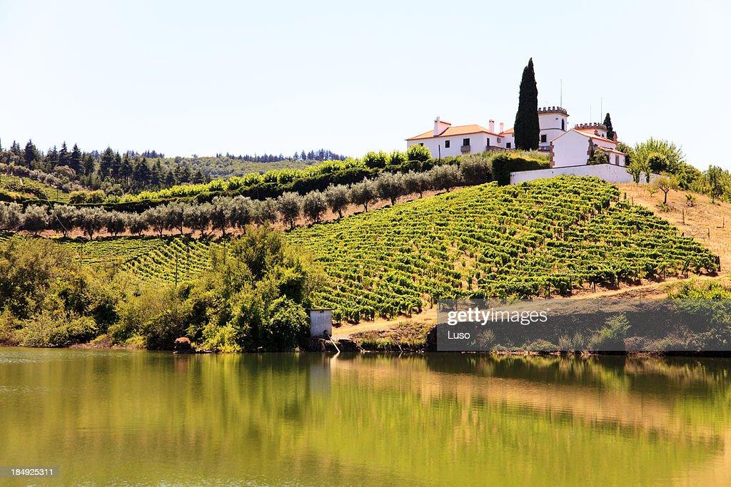 Douro slopes : Stock Photo