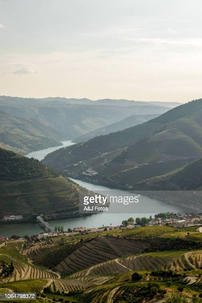douro valley at sunset. - porto portugal stock pictures, royalty-free photos & images
