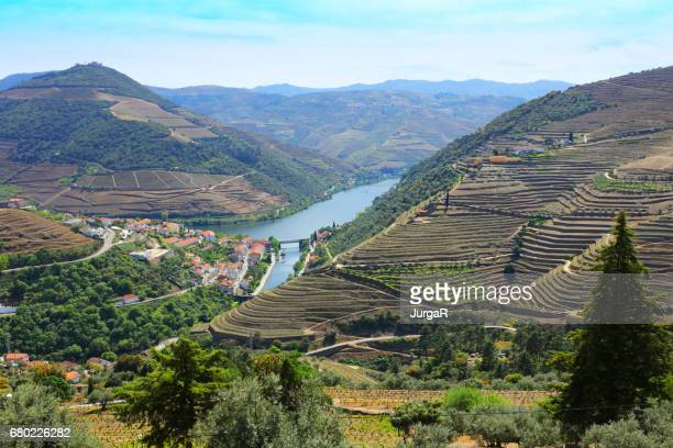 douro valley in portugal - douro valley stock photos and pictures