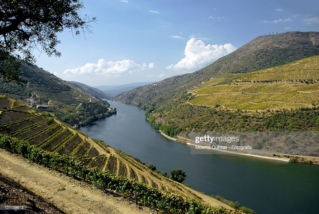 Douro valley : Stock Photo