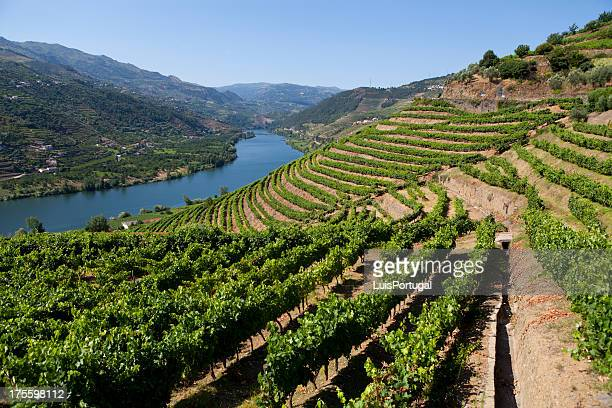 douro valley - portugal stock pictures, royalty-free photos & images