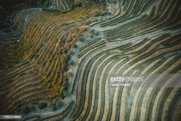 douro vineyards from aerial view - 地形 ストックフォトと画像