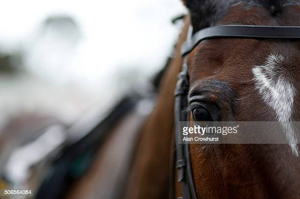 Douvan after winning The Frank Wards Solicitors Arkle Steeple Chase at Leopardstown racecourse on January 24 2016 in Dublin Ireland