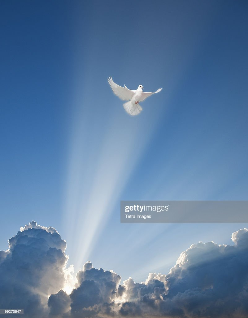 Dove and clouds : Stock Photo