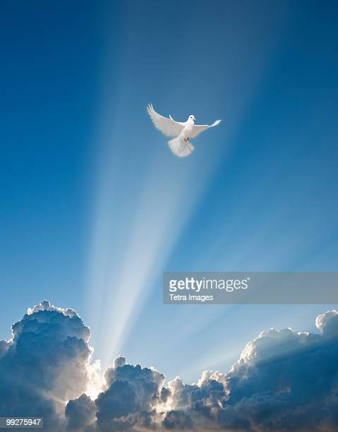 dove and clouds - religion stock-fotos und bilder