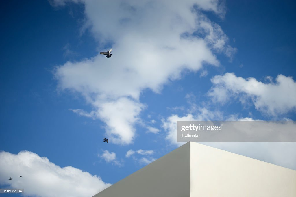 dove birds on blue sky and clouds : Stockfoto