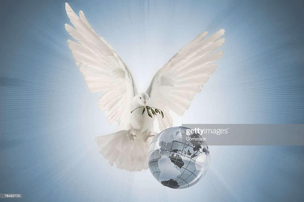 Dove carrying olive branch over globe : Stock Photo
