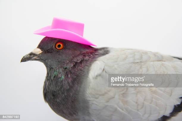 Dove with a elegant pink hat