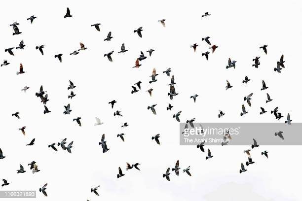 Doves are released during the Peace Memorial Ceremony on the 74th anniversary of the atomic bombing of Hiroshima at the Hiroshima Peace Memorial Park...
