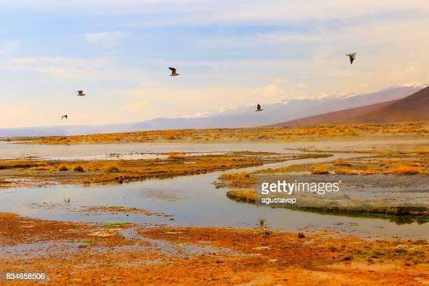 Doves birds flying to freedom - Salar de tara marsh at sunrise - Turquoise lake at dramatic sky, Idyllic Atacama Desert, Altiplano landscape panorama – Antofagasta region - Chilean Andes, Chile, Bolívia and Argentina border