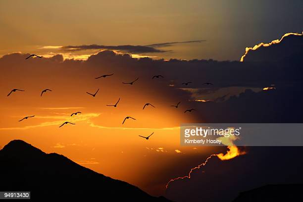 doves fly into sunset - arizona bird stock pictures, royalty-free photos & images