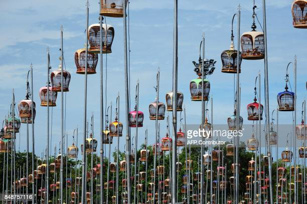 Doves sit in cages hoisted on poles during a birdsinging contest in Thailand's southern province of Narathiwat on September 18 2017 Over 1400 birds...