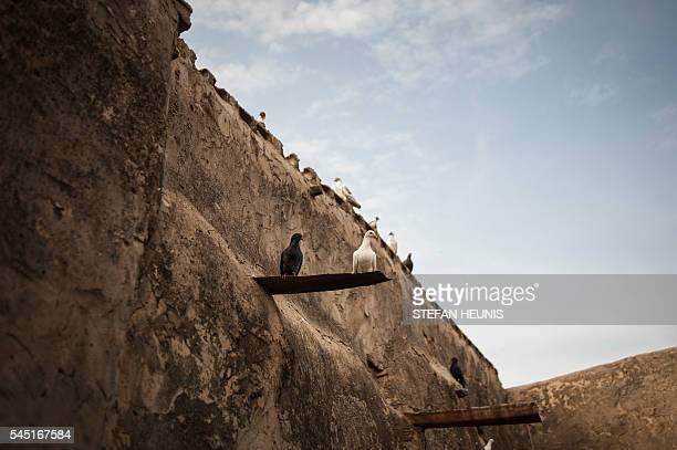 Doves sit on the Emirate's palace walls ahead of the Eid alFitr celebration which marks the end of Ramadan in Kano northern Nigeria on July 5 2016...