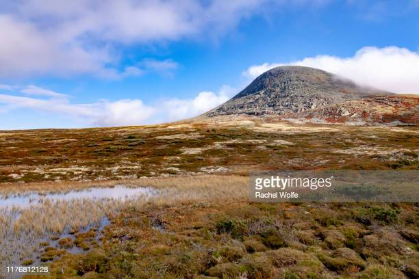 dovrefjell national park - rachel wolfe stock photos and pictures