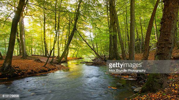 down by the lazy river - spring flowing water stock pictures, royalty-free photos & images