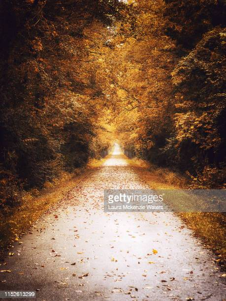 down the bike path in yellow springs - laura woods stock pictures, royalty-free photos & images