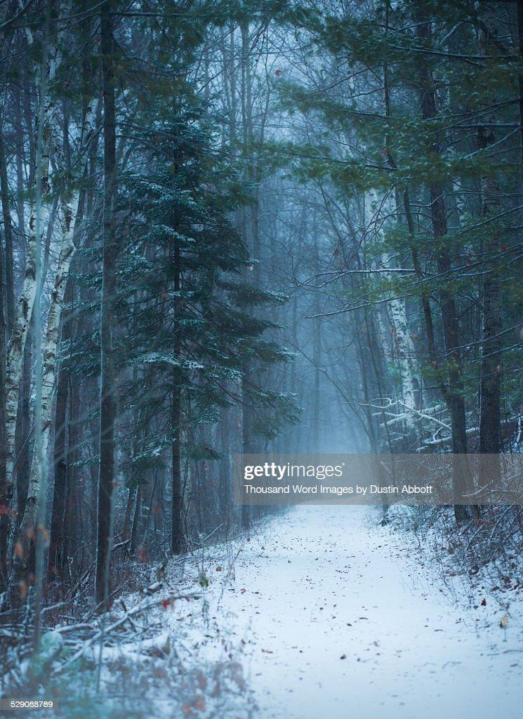 Down Winter's Path : Stock Photo
