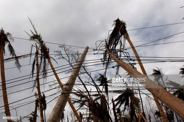 Downed power line poles and damage palm trees are seen in the aftermath of Hurricane Maria in Humacao Puerto Rico on October 2 2017 President Donald...