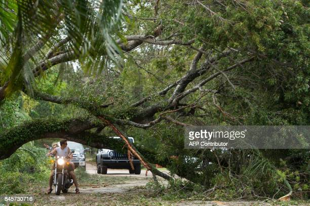 A downed tree blocks the roadway after falling from Hurricane Irma winds in Coconut Grove Florida September 11 2017 / AFP PHOTO / SAUL LOEB