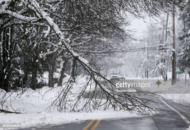 A downed tree branch blocks a street in Andover MA in the aftermath of the second nor'easter storm to hit the region in the span of a week on March 8...