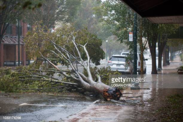 Downed tree can be seen on Middle Street by the Neuse River in New Bern, North Carolina, September 14, 2018 during Hurricane Florence. - Florence...