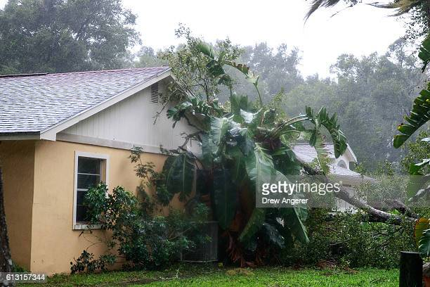 A downed tree from high winds rests against the side of a home in residential community after Hurricane Matthew passes through on October 7 2016 in...