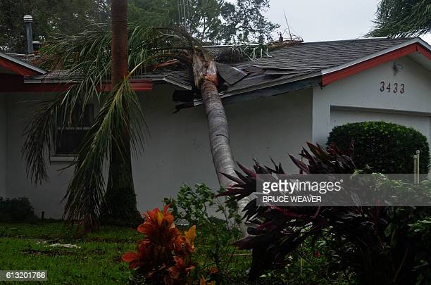 Downed tree lies on top of a house after the passing of Hurricane Matthew in Titusville, Florida on October 7, 2016. Fierce Hurricane Matthew left...