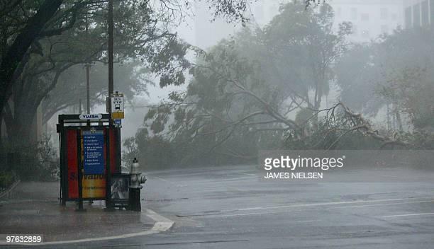 Downed trees block Poydras avenue near St Charles avenue in downtown New Orleans Louisiana as Hurricane Katrina makes landfall 29 August 2005...