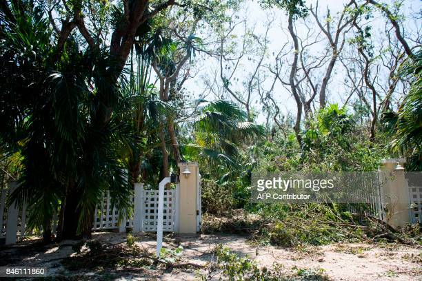 Downed trees from Hurricane Irma block a home's driveway in Islamorada in the Florida Keys September 12 2017 / AFP PHOTO / SAUL LOEB