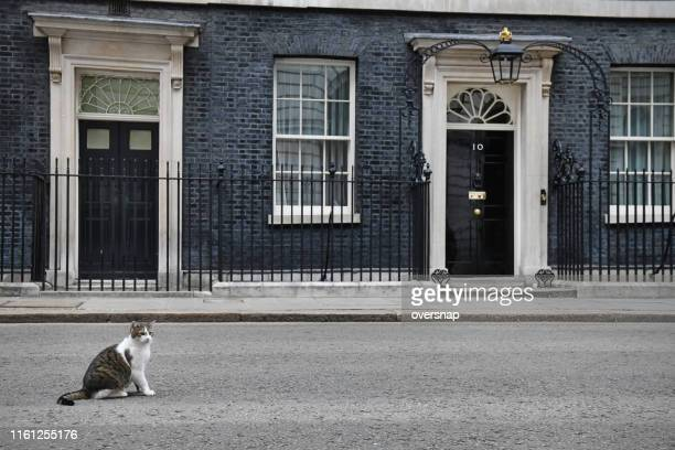 downing street cat - prime minister stock pictures, royalty-free photos & images