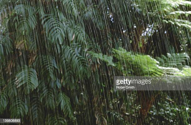 downpour in rainforest - torrential rain stock pictures, royalty-free photos & images
