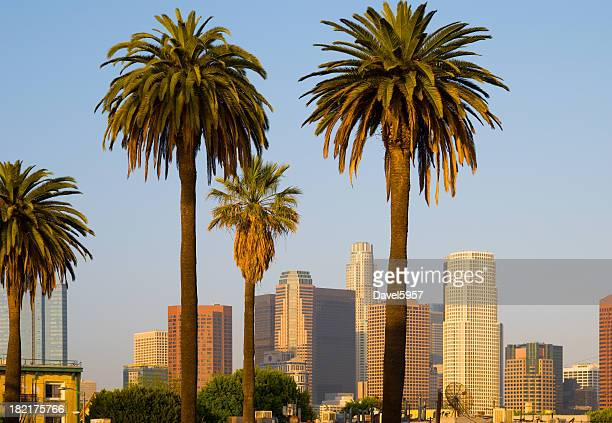 Downtown Los Angeles and Palm Trees