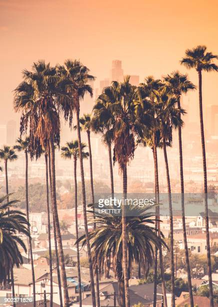 downtown los angeles - beverly hills stock pictures, royalty-free photos & images