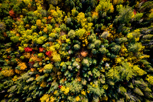 Downward view of a woodland in autumn 1069531558