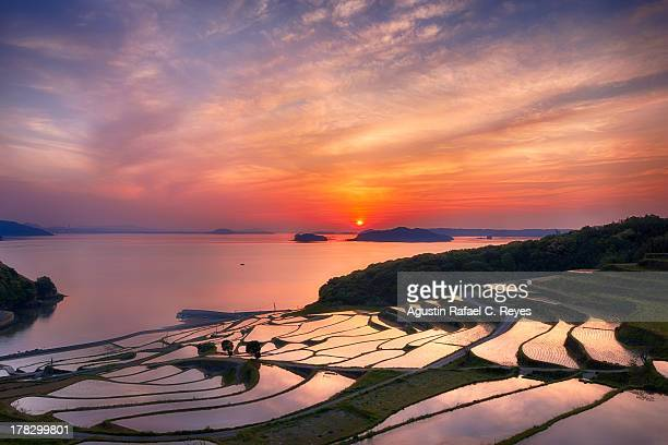 doya rice terraces during sunset - reisterrasse stock-fotos und bilder