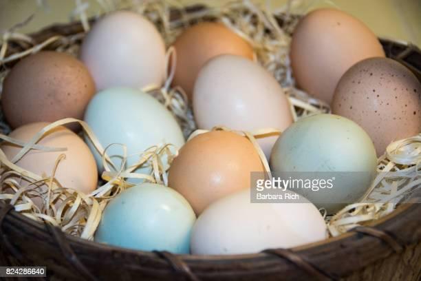 A dozen multi-colored fresh eggs in a basket