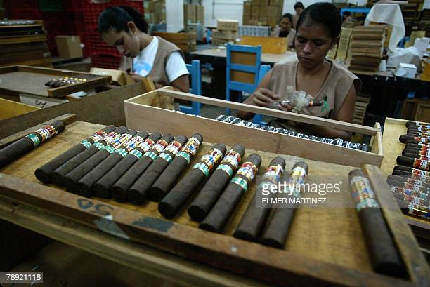 Dozens of women work putting labels in cigars for export in a factory in a farm of Valle de Jamastran Danli some 130 km east of Teguciglpa on...
