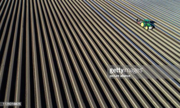 dpatop 15 February 2019 Brandenburg Beelitz Employees of Spargelhof Josef Jakobs GbR lay foil on rows of asparagus The official opening of the...