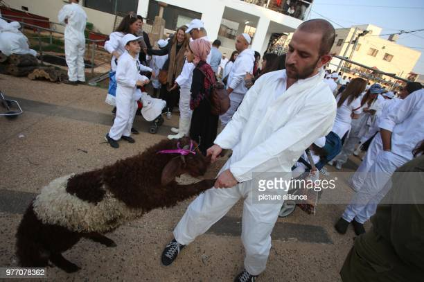 dpatop A member of the Samaritan community prepares a Passover Lamb to be sacrificed to mark the Passover Sacrifice ritual at Mount Gerizim near the...