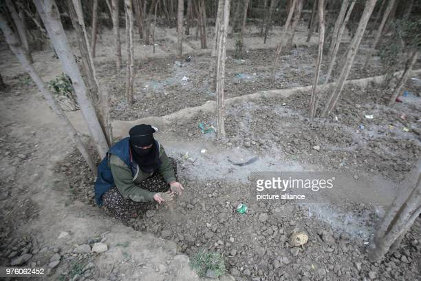 dpatop A picture provided on 30 May 2018 shows Yemeni farmer Ahlam AlAlaya checking the soil in her land farm during an interview with dpa in the...