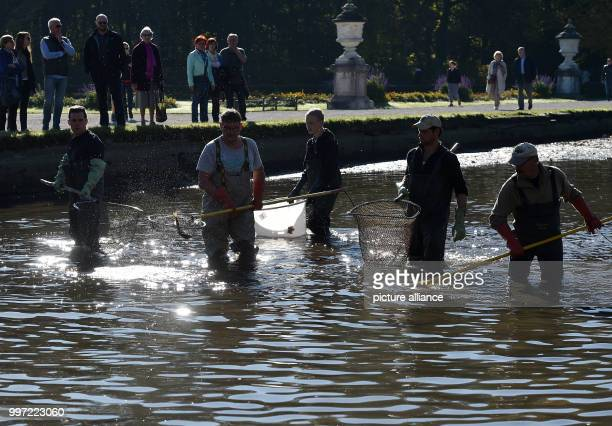 dpatop Fisherman standing during the traditional fishing out in the Nymphenburger canal in Munich Germany 14 October 2017 The fish mostly carp are...