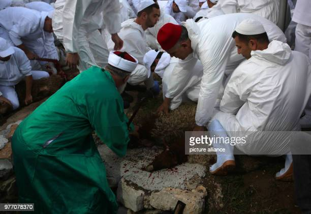 dpatop Members of the Samaritan community slaughter a Passover Lamb to mark the Passover Sacrifice ritual at Mount Gerizim near the West Bank city of...
